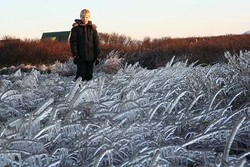 A boy looking at frozen reed.